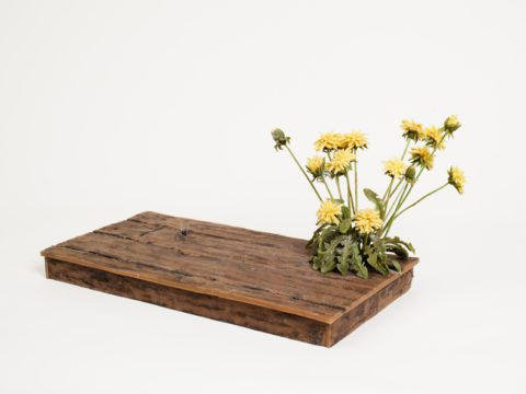Studio Floor with Dandelions and Bee