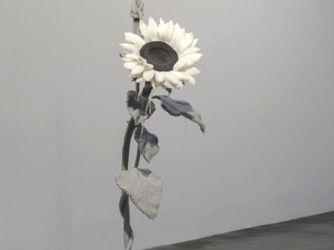 Suicidal Sunflower